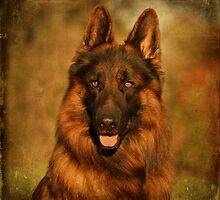 Hoss - German Shepherd Dog by Sandy Keeton