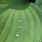 Hosta with Raindrops by Kathilee