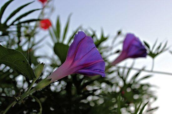 Morning Glory Garden by aprilann