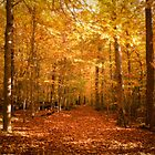 Scenic Leaf Covered Path in a Yellow Mystical Fall Forest ~ Autumn Foliage Landscape by Chantal PhotoPix