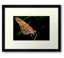 Ethereal beauty Framed Print