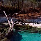 Little River Spring. by chris kusik