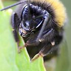 Tiny Bumble Bee by missmoneypenny