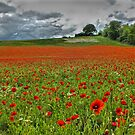 A Field of Poppies - HDR by Colin J Williams Photography