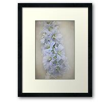 Delphiniums dream Framed Print