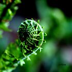 Fiddleheads by Rosemary Sobiera
