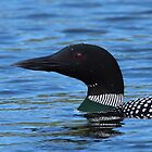 Common Loon by naturalnomad
