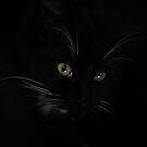 Midnight Kitten by Jo Lyons Photography