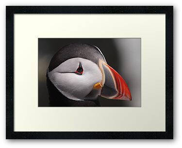 Puffin Portrait by naturalnomad