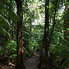 Rainforest Track by Wayne  Nixon