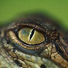 Baby Crocodile by Kenji Ashman