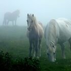 Ponies In The Mist by Graham Kidd