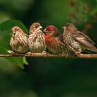 FINCH FAMILY by Sandy Stewart