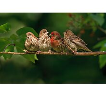 FINCH FAMILY Photographic Print