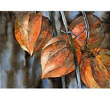 Chinese Lanterns / Physalis Photographic Print