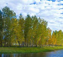 Cottonwoods by Rick Huntsman