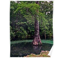Ponce de Leon Spring. Holmes County. Poster