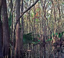 Bull Creek Swamp. by chris kusik