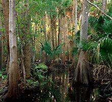 Bull Creek Swamp #2. by chris kusik