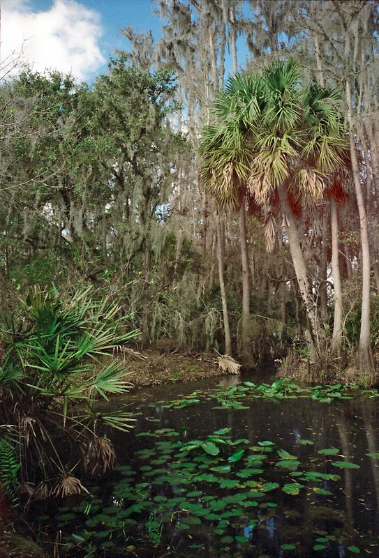 Joshua Creek. Seminole Ranch.  by chris kusik