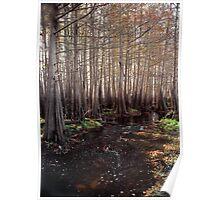 Cypress Swamp. Jane Green Creek #5. Poster
