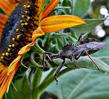 Assassin Bug with Sunflower by bannercgtl10