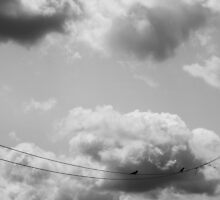 2 Birds on a Wire by Theodore Kemp