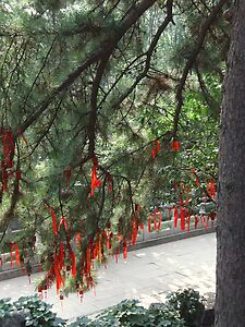 Lots of red prayer ribbons and prayer tags - up in a tree