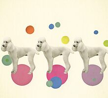 Oodles of Poodles by Cassia