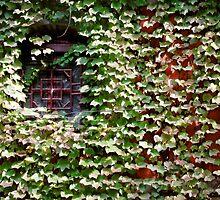 Lots of little leaves - (almost) hiding a wall by Marjolein Katsma
