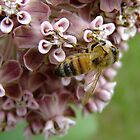 The Bee And The Milkweed by Tracy Faught