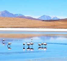 Flamingos - Salar Uyuni - Amongst Volcanos by Honor Kyne