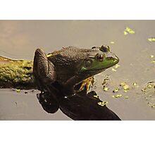 Frog June Photographic Print