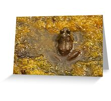 Frog July Greeting Card