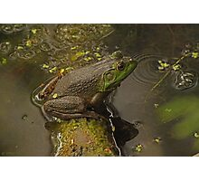 Frog September Photographic Print