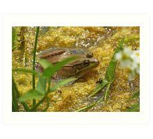 Frog August Art Print