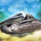 Old Mr. Pelican by Rhonda Strickland