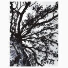 Tree Dream by lupideloop