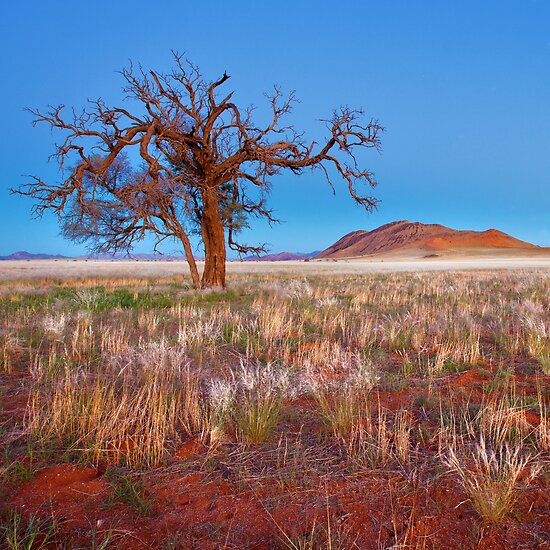 A New Dawn by Jill Fisher