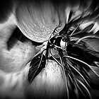 Colourless Apples by Stan Owen