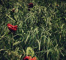 In Flanders Fields by Citizen
