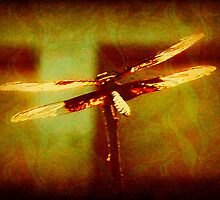 Textured Dragonfly by Lisa Taylor