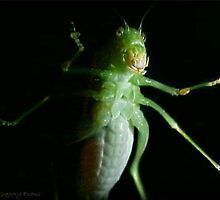 Katydid Portrait by Jean Gregory  Evans