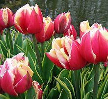 Tulips Dreaming - Keukenhof Gardens by kathrynsgallery