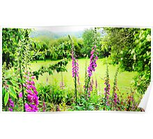 Foxgloves with Beautiful View Poster