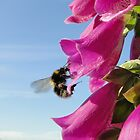 The Foxglove Forager by Barrie Woodward