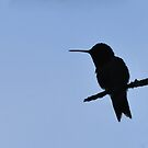 Hummer Silhouette by Lolabud