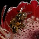 Bees on Pink Ice by Antonia  Valentine