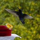 Hummingbird Chirping by Al Bourassa