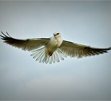 Hovering  by Barb Leopold